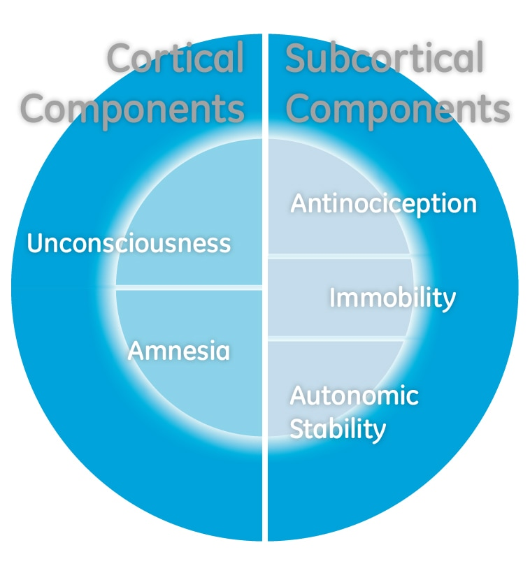 adequacy of anaesthesia (AoA, adekvat anestesi), kortikala och subkortikala komponenter.